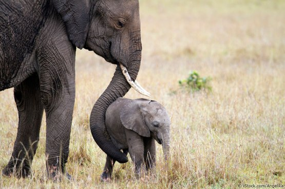 elephant-baby-mother-credited